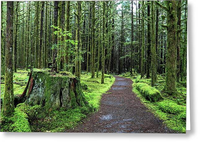 All Covered With Green Moss Magic Forest Greeting Card by Alex Lyubar