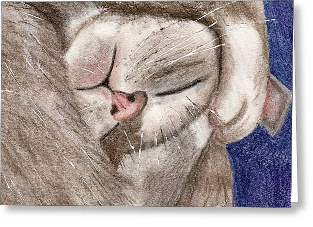 All Curled Up Greeting Card by Terry Taylor