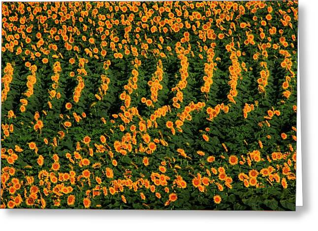 Greeting Card featuring the photograph All In A Row by Chris Berry