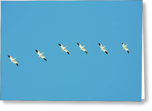 All In A Row Greeting Card by Todd Klassy