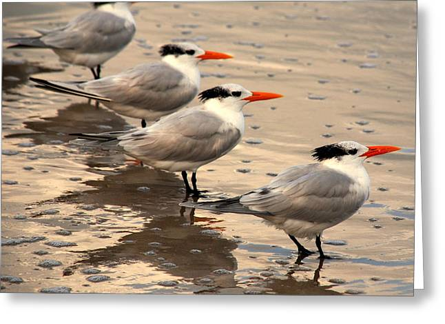 All Lined Up Greeting Card by Susanne Van Hulst