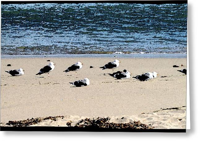 All My Gulls In A Row Greeting Card by Ellen Lerner ODonnell