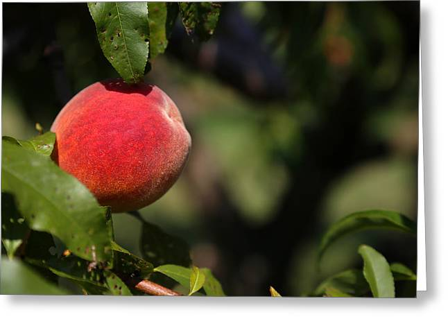 All Natural Peach Greeting Card by Karol Livote