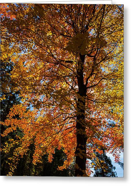 All The Colors 1 Greeting Card by Claus Siebenhaar
