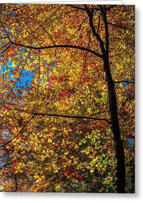 All The Colors 2 Greeting Card by Claus Siebenhaar