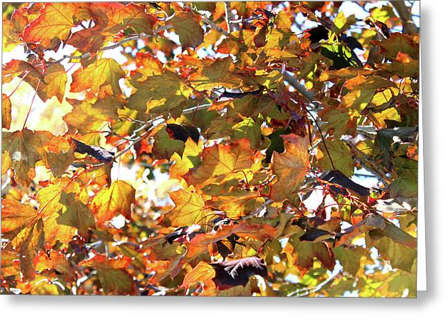 All The Leaves Are Red And Orange Fall Foliage With Sunshine Greeting Card
