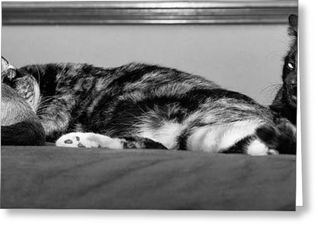 All Tuckered Out Greeting Card by Karen Slagle