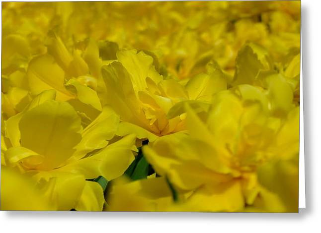 All Yellow Greeting Card by Simona Stroescu