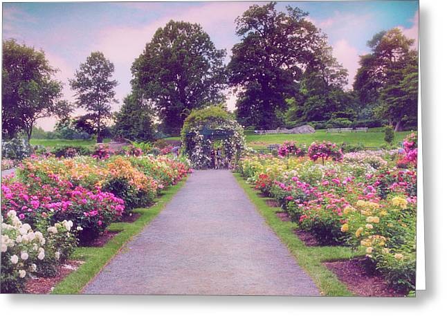 Allee Of Roses  Greeting Card