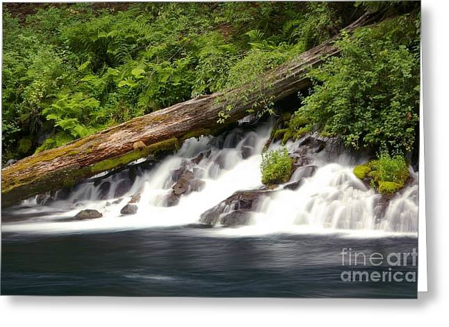 Allen Springs On The Metolius River Greeting Card