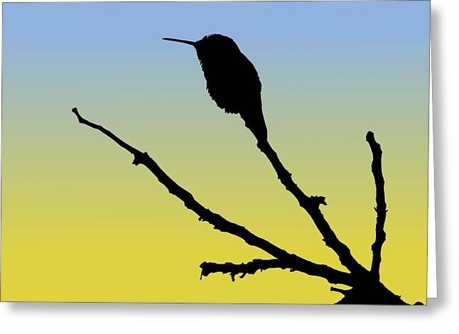 Allen's Hummingbird Silhouette At Sunrise Greeting Card