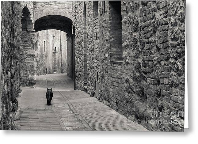 Greeting Card featuring the photograph Alley Cat by Brenda Tharp