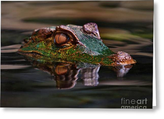Alligator Above Water Reflection Greeting Card