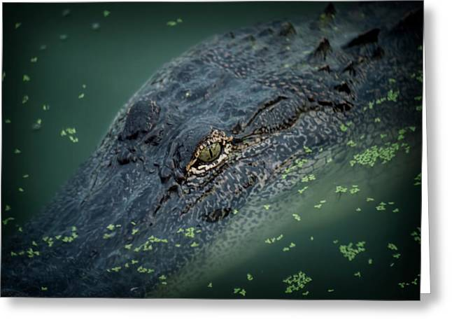 Alligator  Greeting Card by Alicia Morales