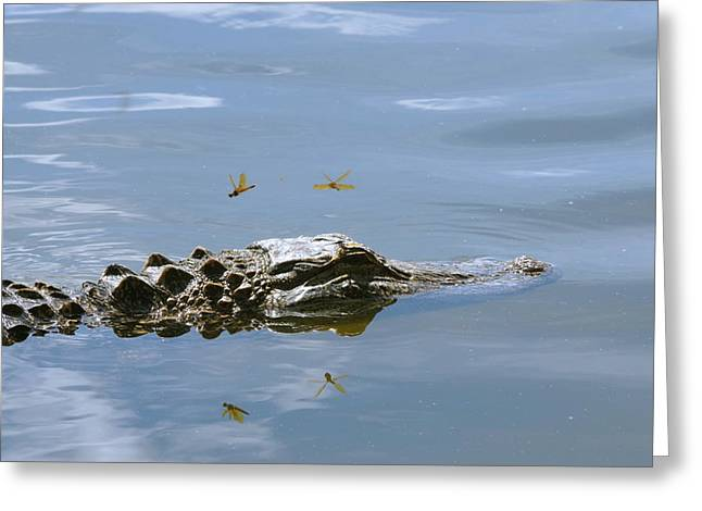 Alligator And Dragonflies Greeting Card by Aaron Rushin