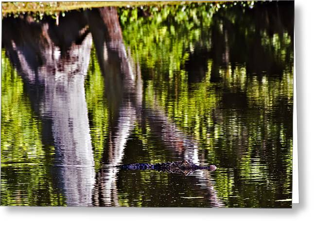 Alligator Greeting Card by Michael Whitaker