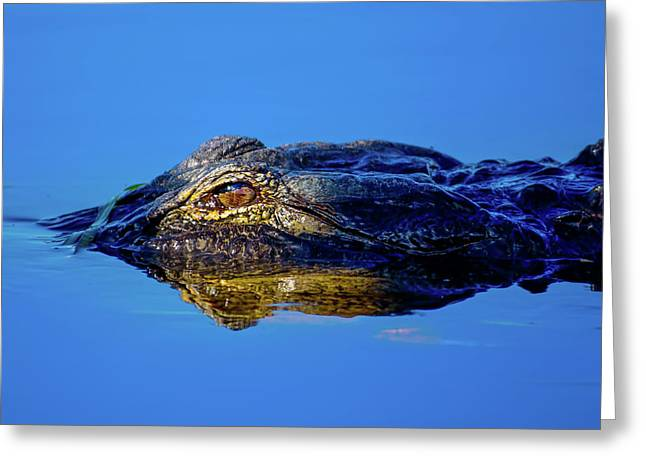 Alligator Sunrise Greeting Card