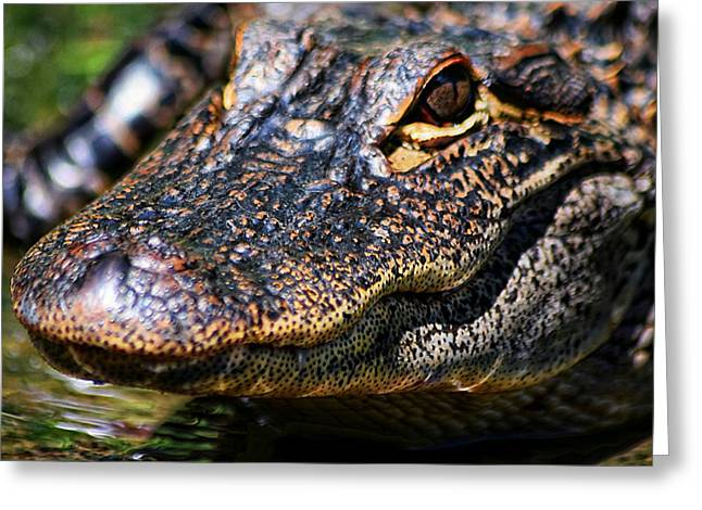 Alligator Super  Close Up Greeting Card