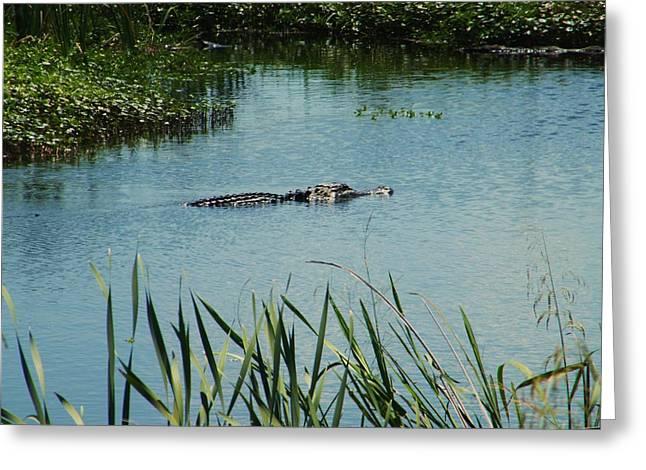 Alligators Greeting Card by Nereida Slesarchik Cedeno Wilcoxon