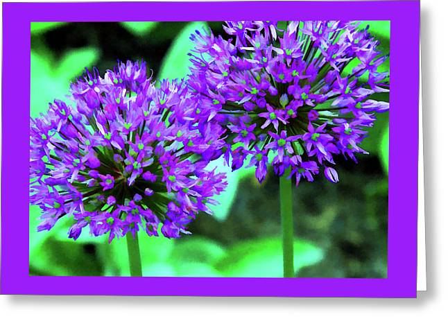 Allium Bulbs Greeting Card