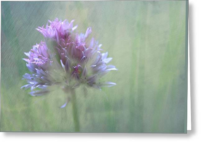 Allium Impressionism Greeting Card