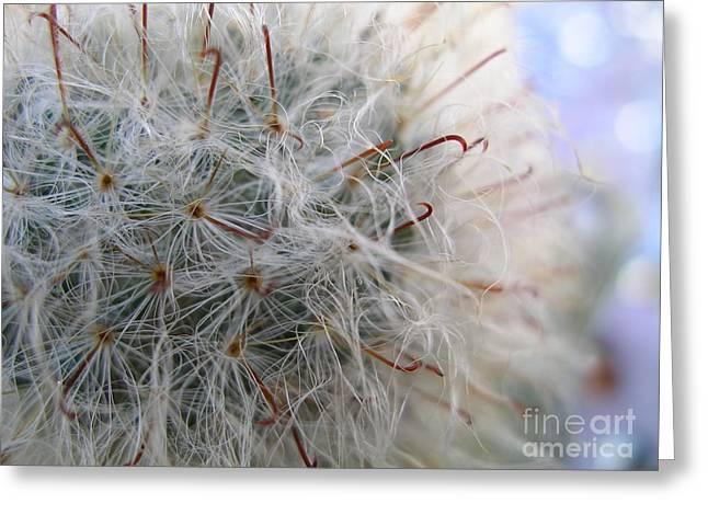 Greeting Card featuring the photograph Allium Sativum by Jolanta Anna Karolska