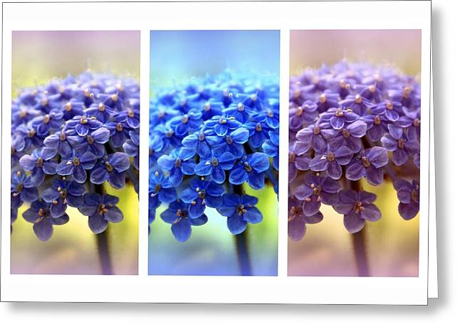 Allium Triptych Greeting Card by Jessica Jenney
