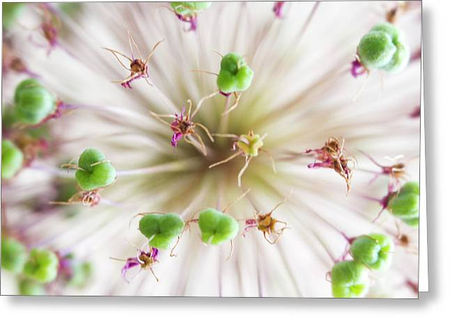Allium Zoom Greeting Card