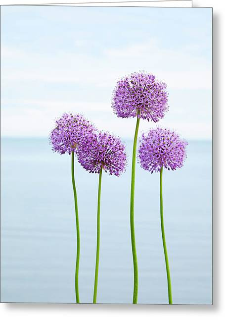 Alliums 2 Greeting Card