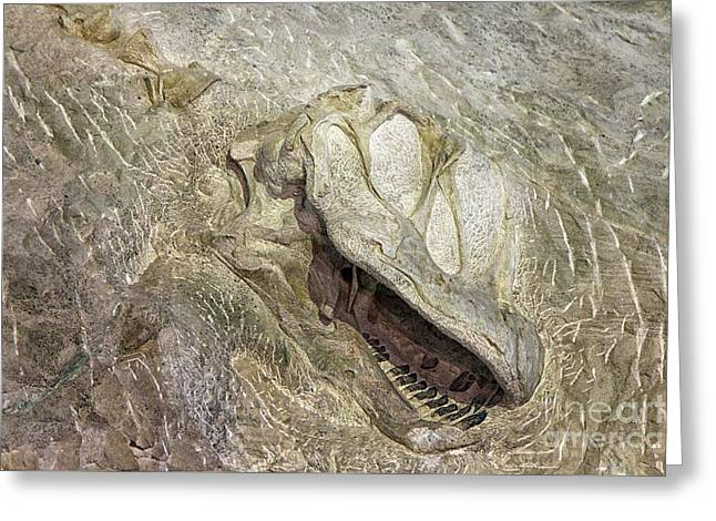 Greeting Card featuring the photograph Camarasaurus by David Millenheft