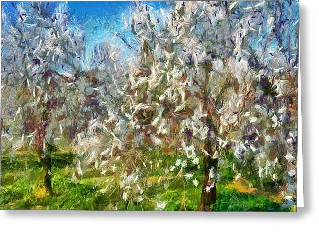 Almond Orchard Blossom Greeting Card