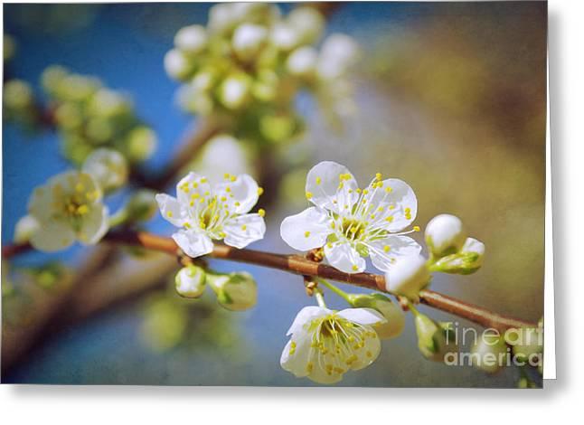 Almond Tree Branch Greeting Card
