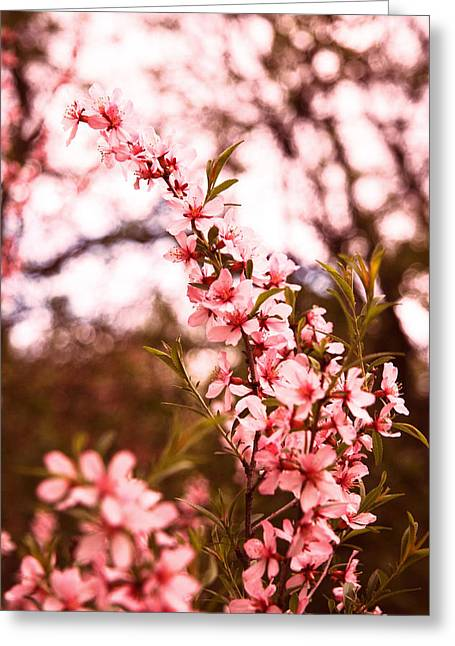 Almonds1 Greeting Card