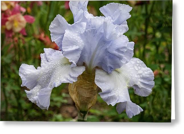 Almost Blue Bearded Iris Greeting Card