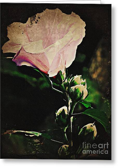 Almost Forgotten Greeting Card by Sarah Loft