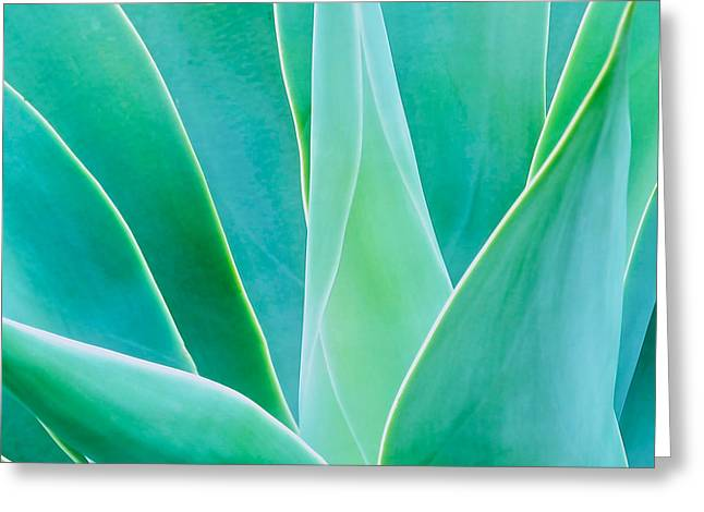 Aloe Glow Greeting Card