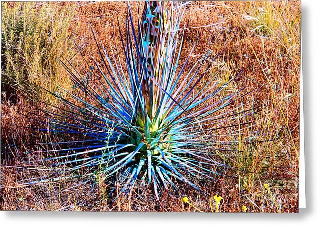 Aloe Vera In Meadow Greeting Card by Mariola Bitner