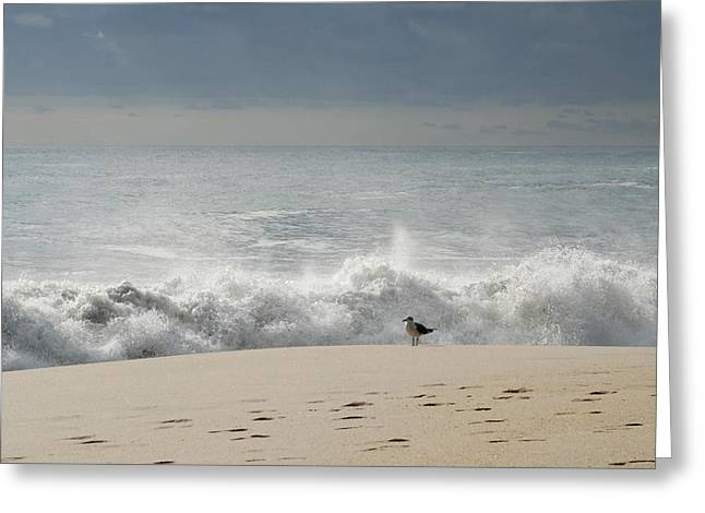Alone - Jersey Shore Greeting Card by Angie Tirado