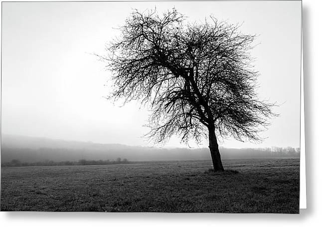 Alone In A Field Greeting Card by Andrew Pacheco