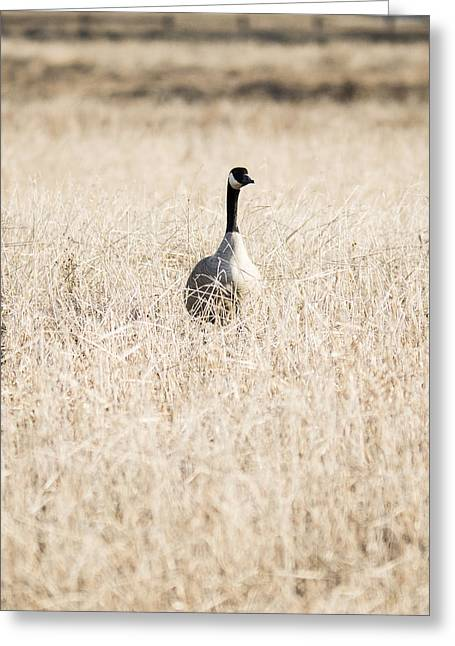 Alone In The Field Greeting Card