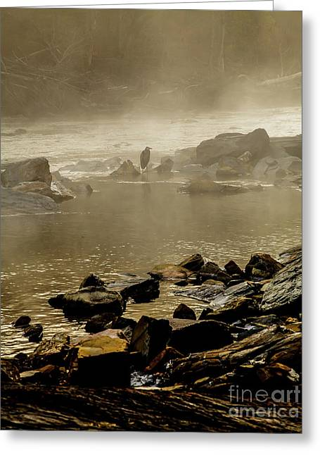 Greeting Card featuring the photograph Alone In The Mist by Iris Greenwell