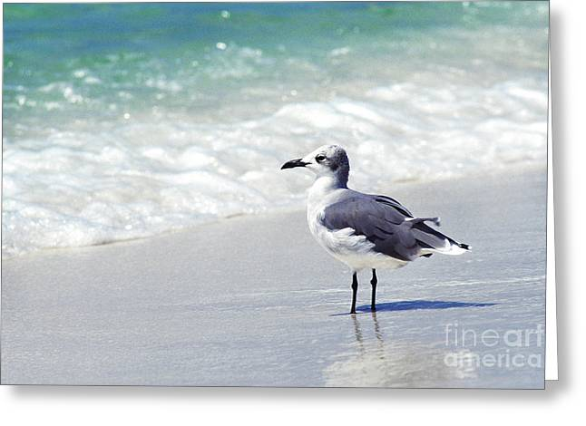 Alone On The Beach Greeting Card by Thomas R Fletcher