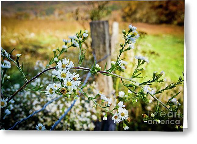 Greeting Card featuring the photograph Along A Fence Row by Douglas Stucky