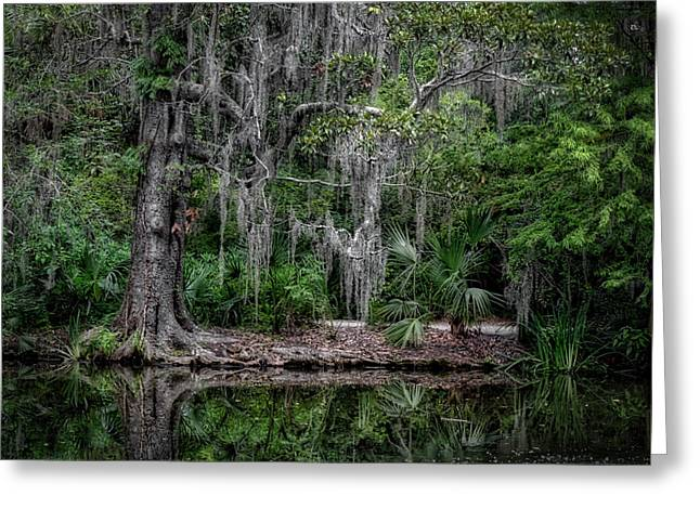 Greeting Card featuring the photograph Along The Bank by Michael Colgate