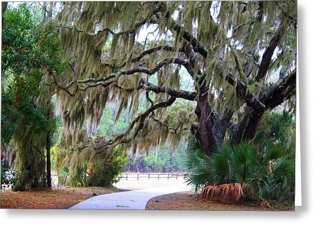 Greeting Card featuring the photograph Along The Path by Kathryn Meyer