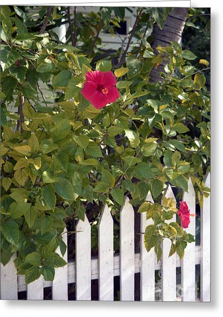 Along The Picket Fence Greeting Card by Richard Rizzo