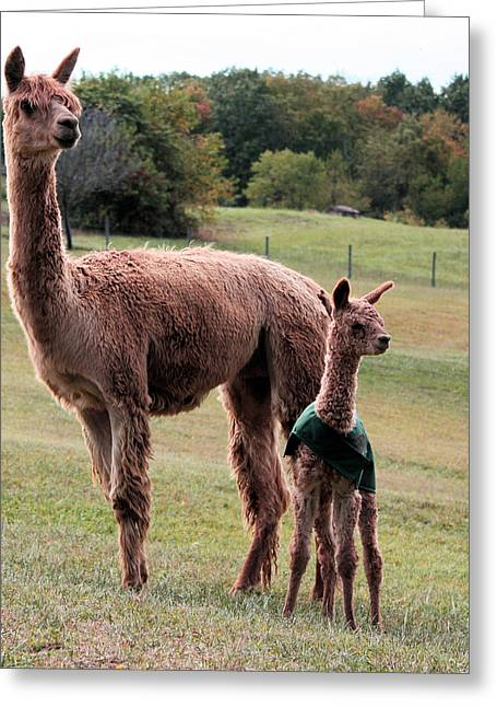 Alpaca And Cria Greeting Card