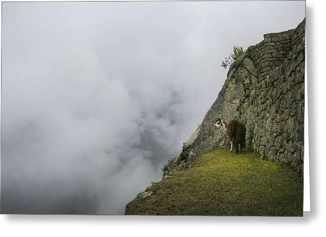 Alpaca On The Edge Greeting Card