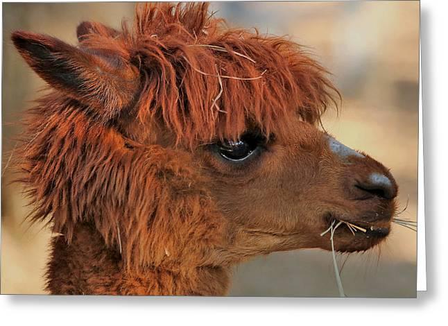 Alpaca Portrait Greeting Card