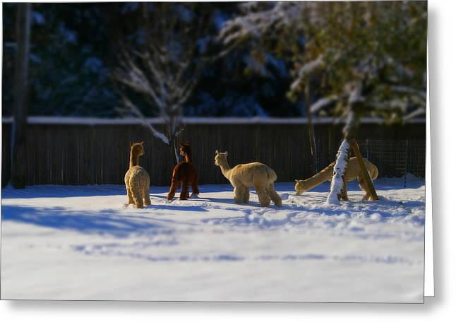 Alpacas In The Snow Greeting Card by Theresa Pausch